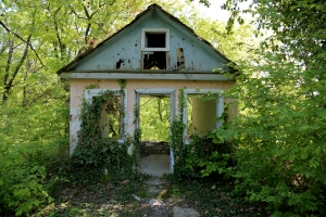 An old, abandoned house in the woods, overgrown plants